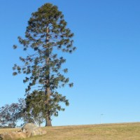 Lost Moruya - Braemar Farm Homestead