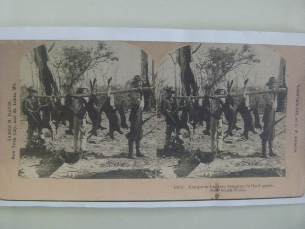 Stereograms such as these would have been used at Newstead Public School - MDHS Collection
