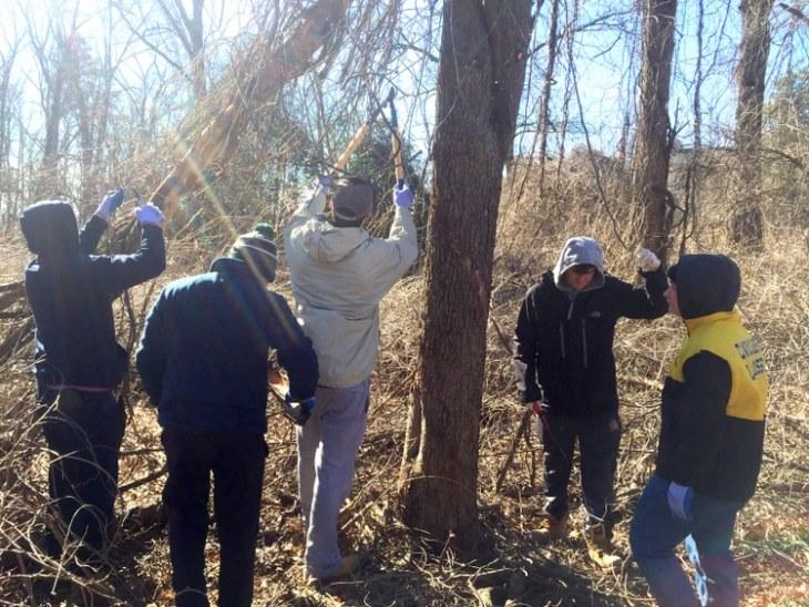 wisteria volunteers