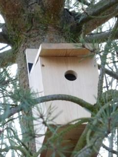 Green Team Nest Boxes24