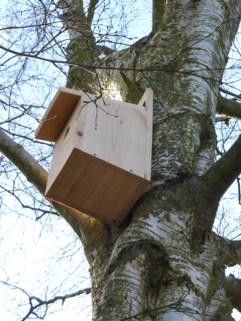Green Team Nest Boxes27