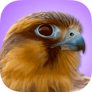iBird Pro Guide to Birds image not available