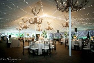 Twinkle Canopy at Galleria Marchetti Wedding 2
