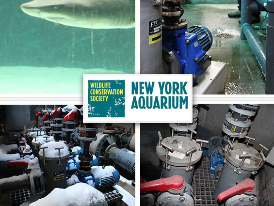 MDM Pumps New York Aquarium testimonial