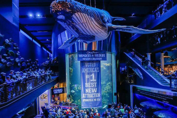 MDM Pumps Wonders of Wildlife Museum aquarium installation