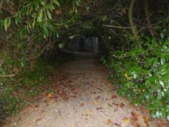tree lined path to castle remains
