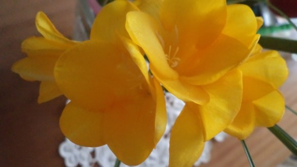 това е цветенце от Варна