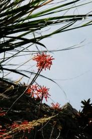 Floră, Port Soller
