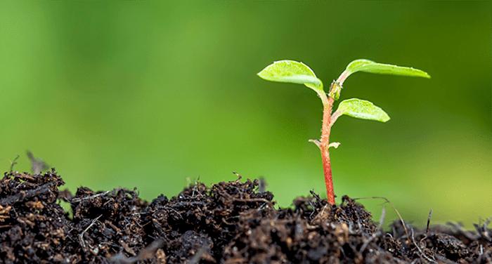 Avaliação para Plantadores de Igrejas