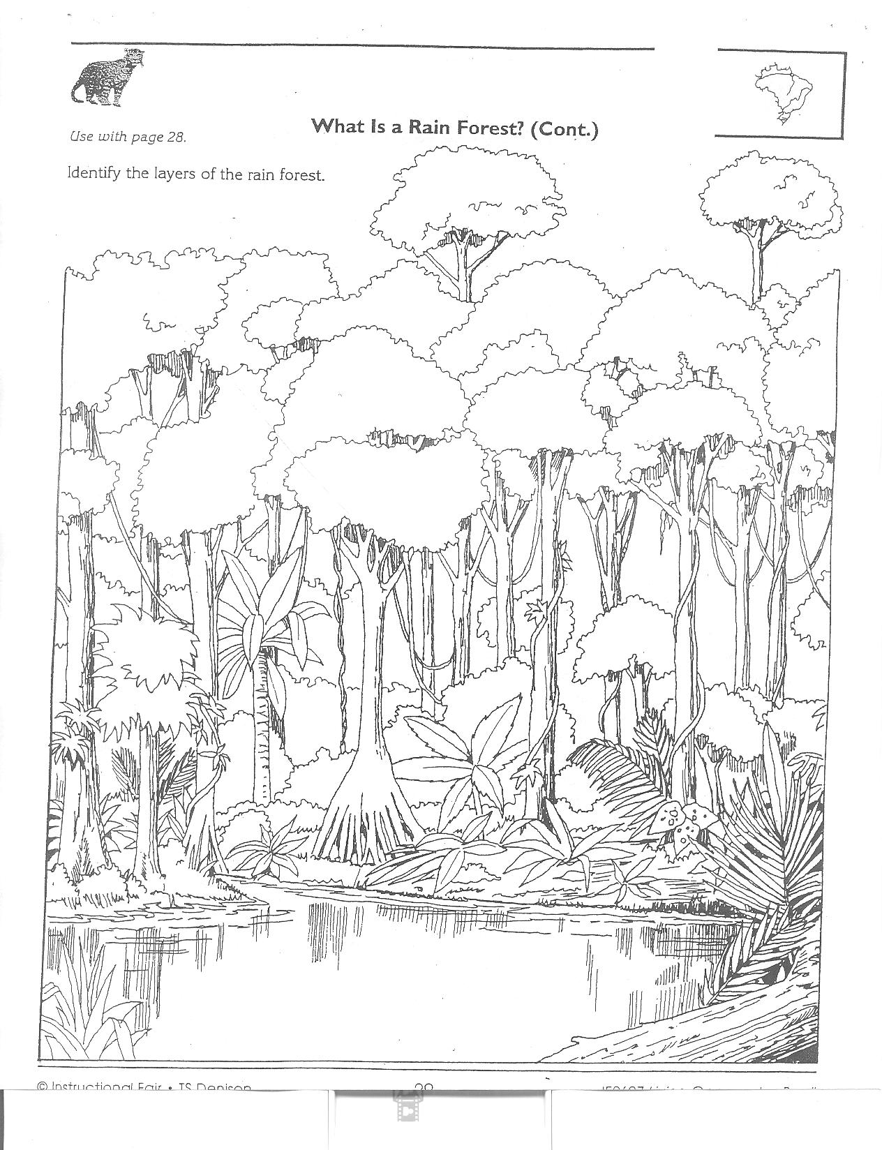Amazon Rainforest Packet 2