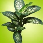Ενα φυτό γεμάτο δηλητήριο