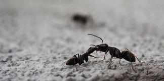 Πως θα ξεφορτωθούμε τα μυρμήγκια οικολογικά