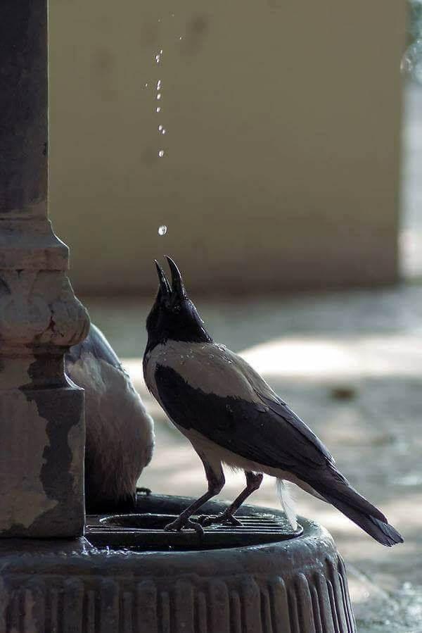 Ενα πουλάκι διψασμένο