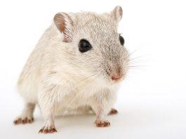 Διώχνουμε τα ποντίκια και τους αρουραίους