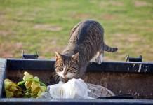 Απωθήστε τις γάτες από τα σκουπίδια