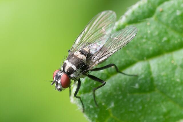 Πως καθαρίζουμε λεκέδες που αφήνουν οι μύγες.