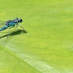 Πως θα διώξετε τα έντομα από τα φυτά