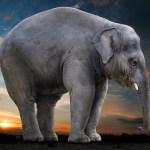 elephant-2605215_640
