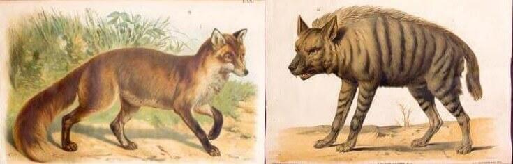 Αισώπου μύθοι - ύαινα και αλεπού