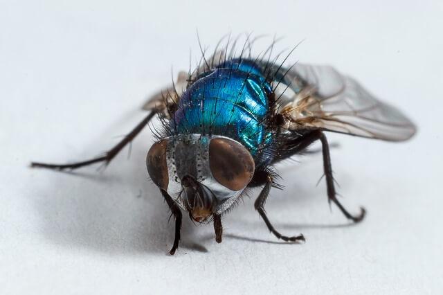 Τρώτε έξω και σας ζάλισαν οι μύγες;