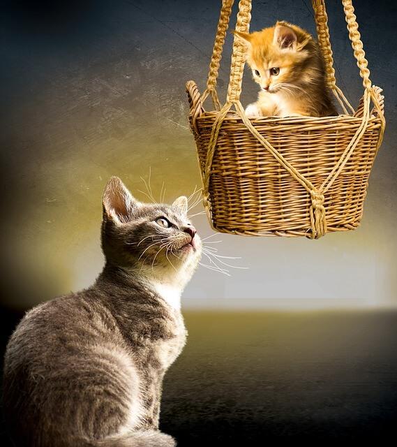 Για να μην ανακουφίζεται το γατάκι στο παρτέρι σας
