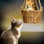 Για να μη πηγαίνει το γατάκι στο παρτέρι σου