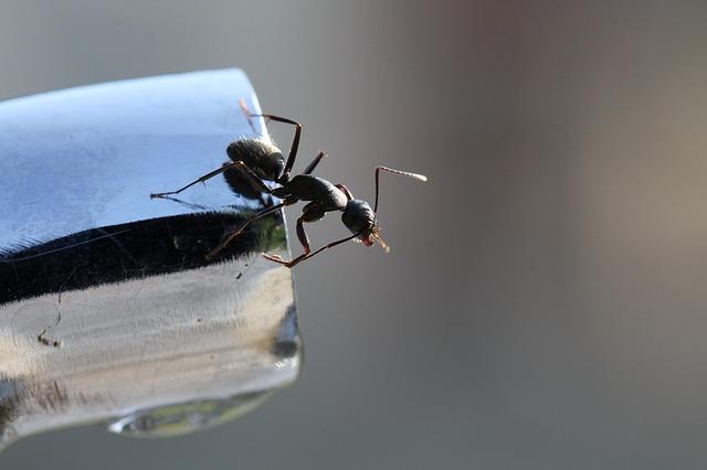 Μυρμήγκια στα ντουλάπια ρούχων και του νεροχύτη