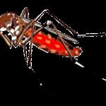 Ετσι θα ξεφορτωθείς τα κουνούπια