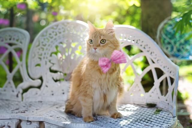 Για να μη μυρίζουν οι ακαθαρσίες της γάτας, υπάρχει κόλπο
