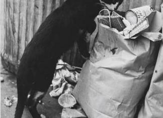 Διώξε τις γάτες από τα σκουπίδια
