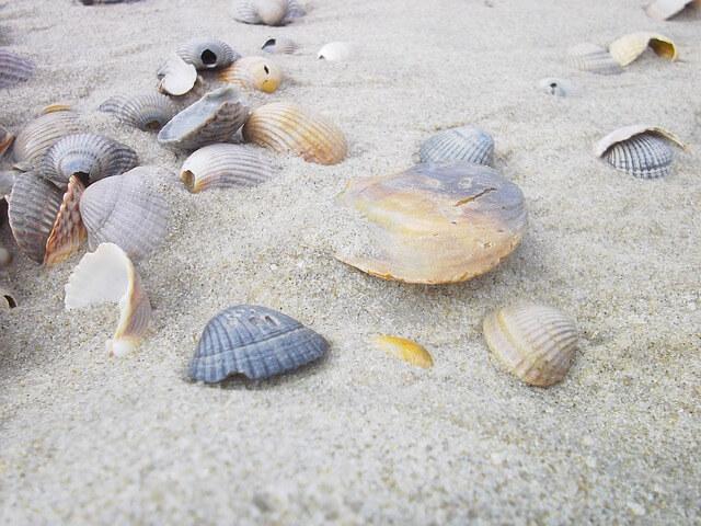 Βγάλε την άμμο από τα κοχύλια