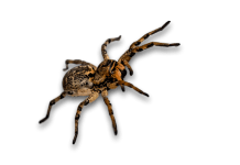 Μπαίνουν αράχνες στο σπίτι;
