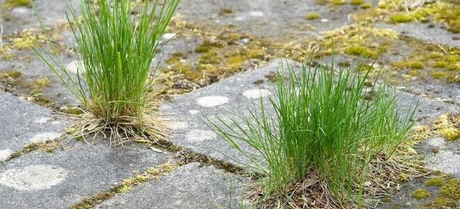 Βλάστηση και αγριόχορτα ανάμεσα στις πλάκες
