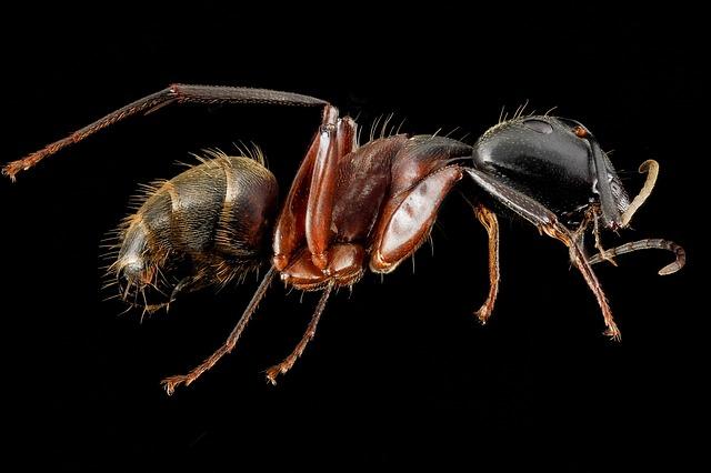 Είδες μυρμήγκια στην κουζίνα; Υπάρχει κόλπο!