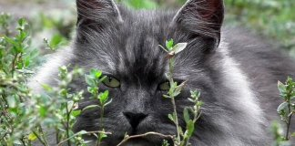 Σκάβει η γάτα στα φυτά;