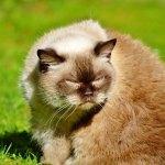 cat-2917592_640