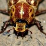 Εξαφανίζουμε τις κατσαρίδες χωρίς τοξικά προϊόντα