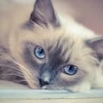 kitty-2602099_640