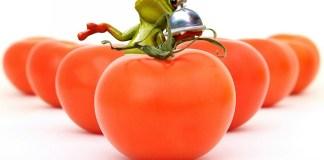 Ντομάτες πως τις διατηρούμε