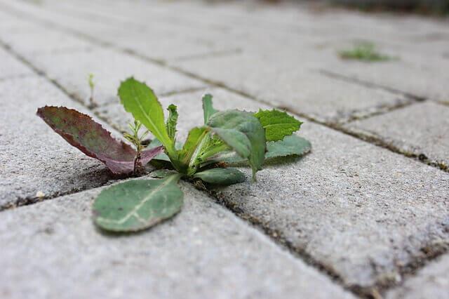 Βγάλε τα αγριόχορτα οικολογικά