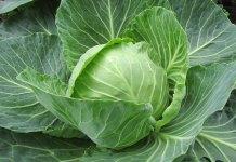 Πως διαλέγουμε το λάχανο