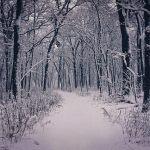 winter-1884989_640
