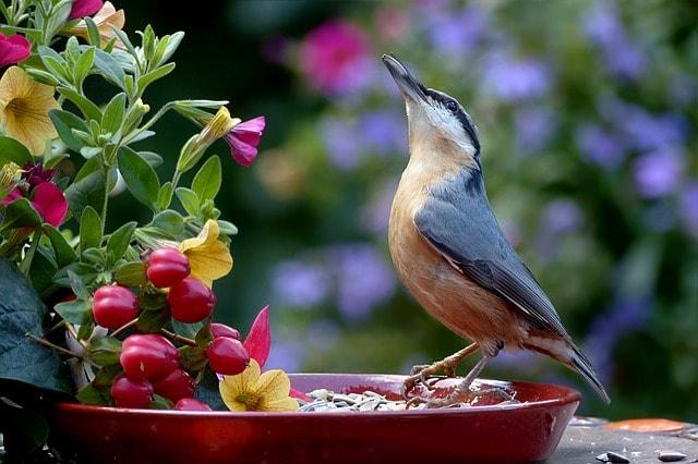 Ταΐζουμε τα πουλάκια τ' αλανιάρικα