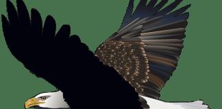 Ο πληγωμένος αετός