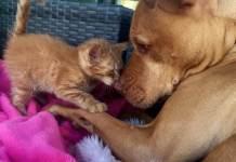 Ενας σκύλος και μια γάτα