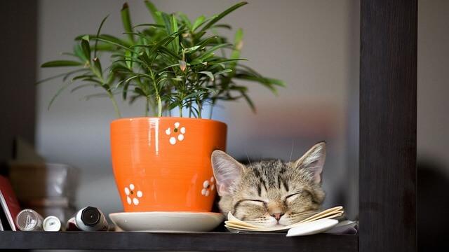 Για να μη καταστρέφει το γατάκι τα φυτά του σπιτιού