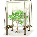 φυτά στην παγωνιά