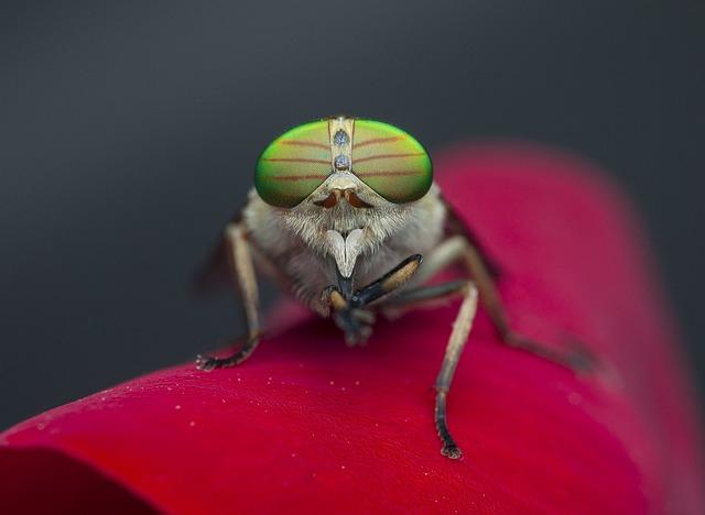 Στις μύγες δεν αρέσουν τα ταξίδια