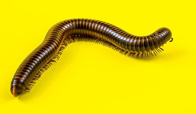 Πως θα ξεφορτωθείς τα σκουλήκια από τις γλάστρες