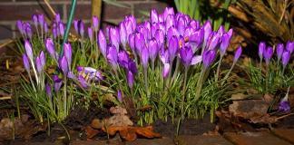 Ο κήπος και οι εργασίες τον Μάρτιο